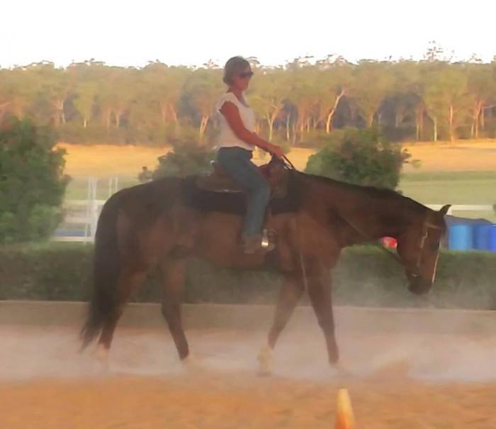 LIVER CHESTNUT QUARTER HORSE GELDING