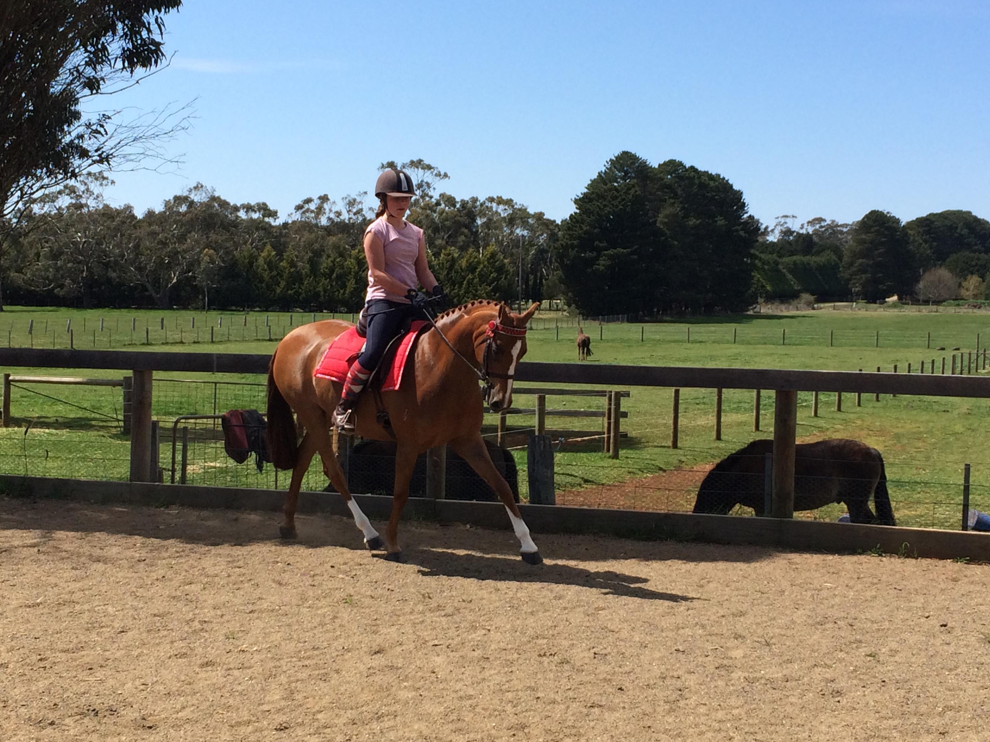 Large show/dressage pony