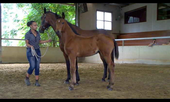 World Royal filly 'Belcam Willow""