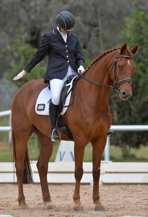 Elem/medium dressage, training 90cm SJ