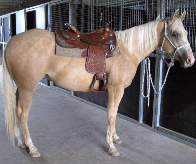 For Quick Sale | Good Prophecy gelding (See Video)