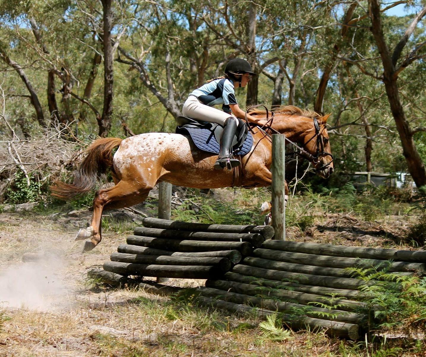 'Jemma' Appaloosa pony