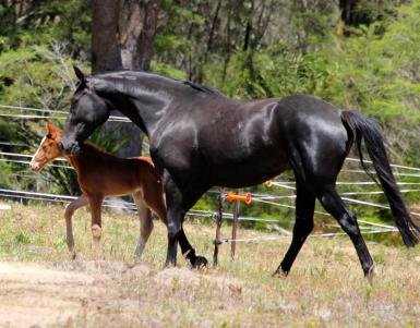 Poppy with Riverside filly