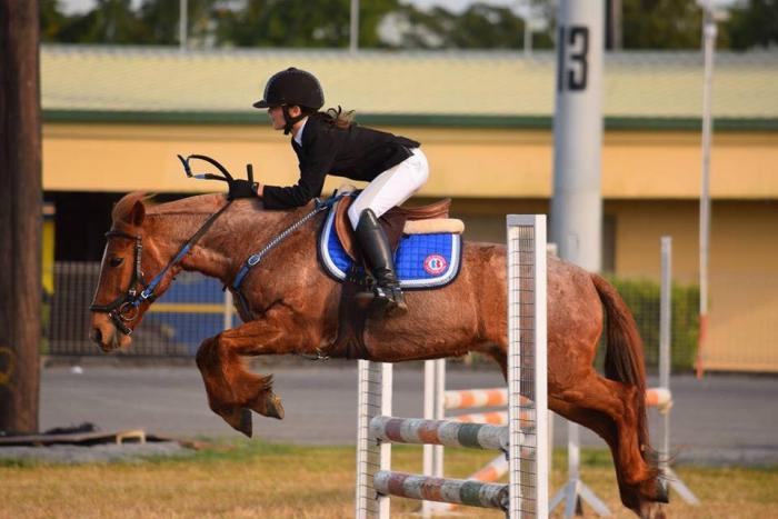 Ultimate Show Jumping Pony