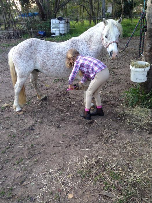 Fantastic kids pony 11.2hh 8yr old geld