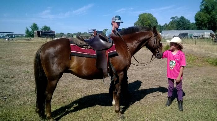 All Rounder gelding price reduced