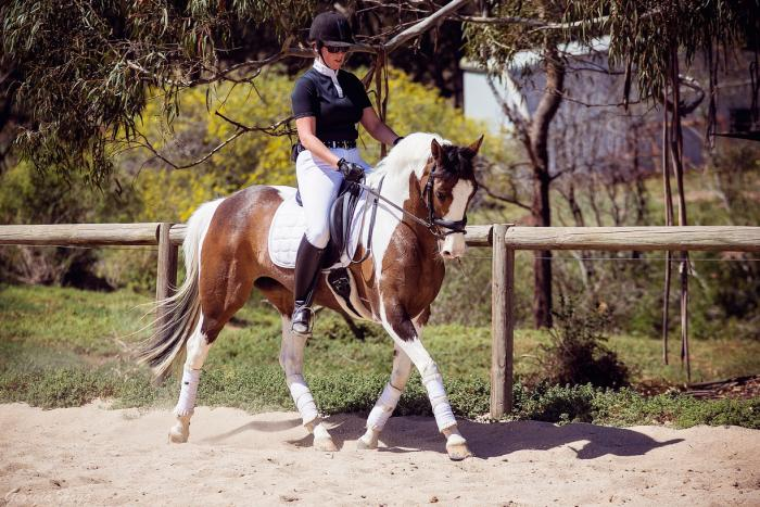 Super little Paint mare - Pony Dressage prospect