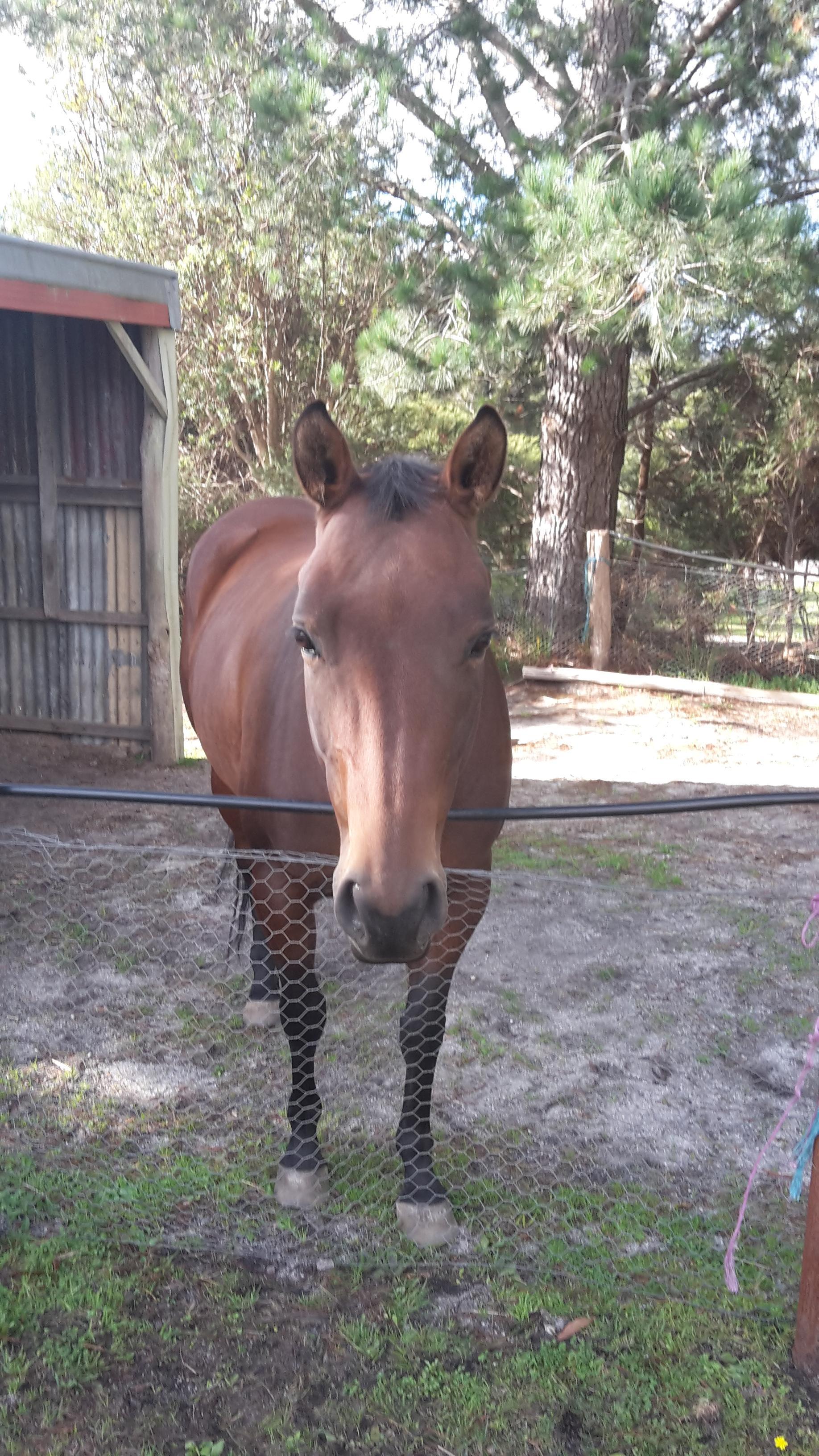 Exceptional quarter horse mare