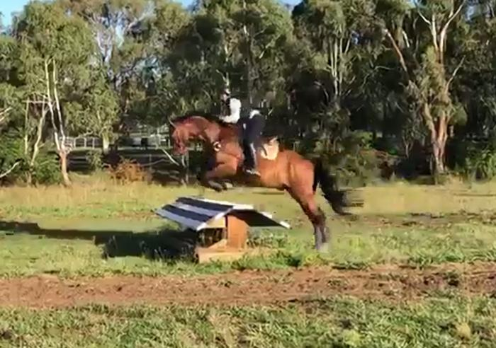 APH Swish II - your next eventing superstar