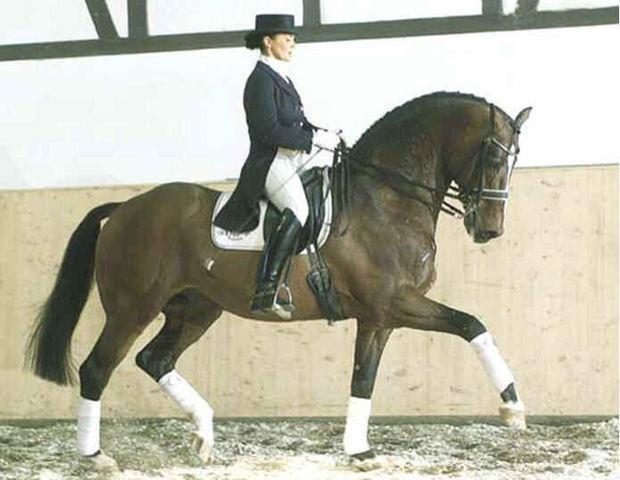 Lucky Lionell - ACE Group Stallion Service Auction