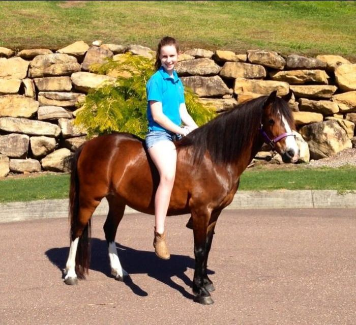 Yarra Heights Venus - Stunning Beginners Pony