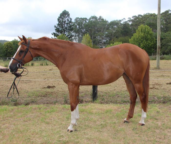 Stunning trainable mare