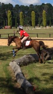 Gorgeous Schoolmaster Pony