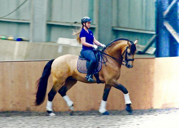 AT STUD: Lusitano - Imported - Movement!