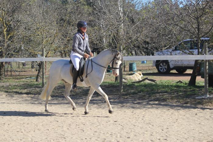 Outstanding type Welsh B gelding