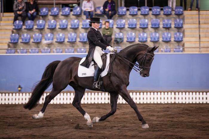 FEI Dressage Horse Neversfelde Rupert