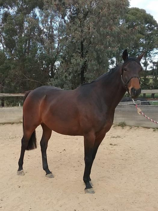 Bargain for quality mare