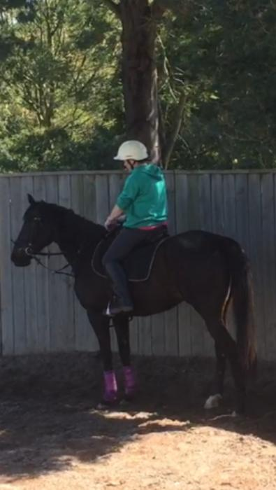 7yrs TB gelding 16 hands, looking for good home.