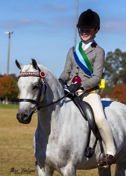 Arabian Riding Pony Mare