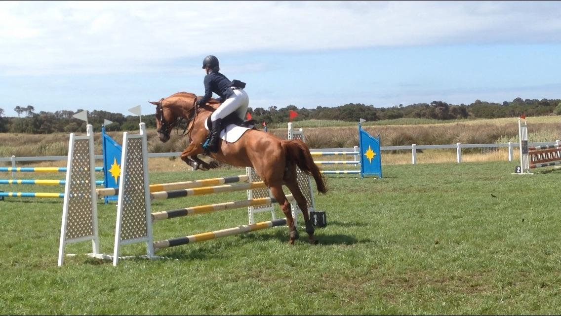 Lovely eventing mare