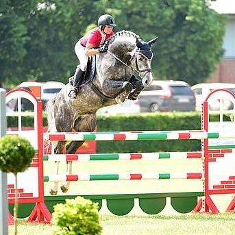 Super jumping colt for top sport