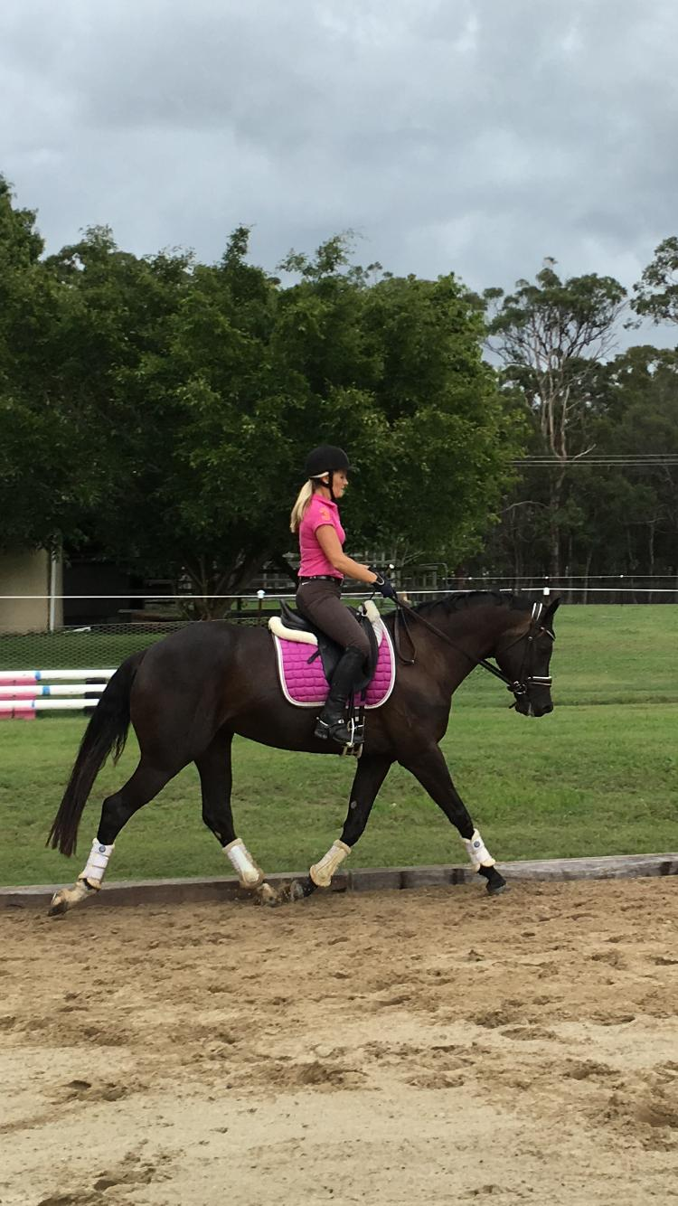 Flashy Dressage/Show Mare