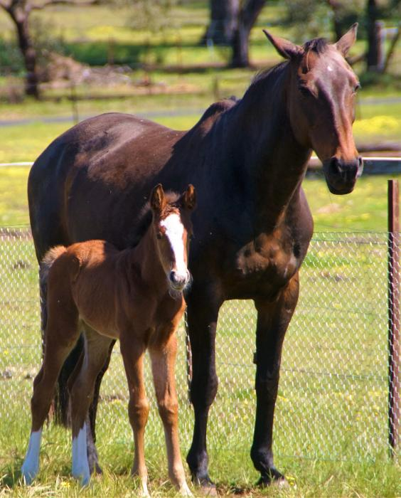 Beautiful Bay Filly - Amazing Bloodlines