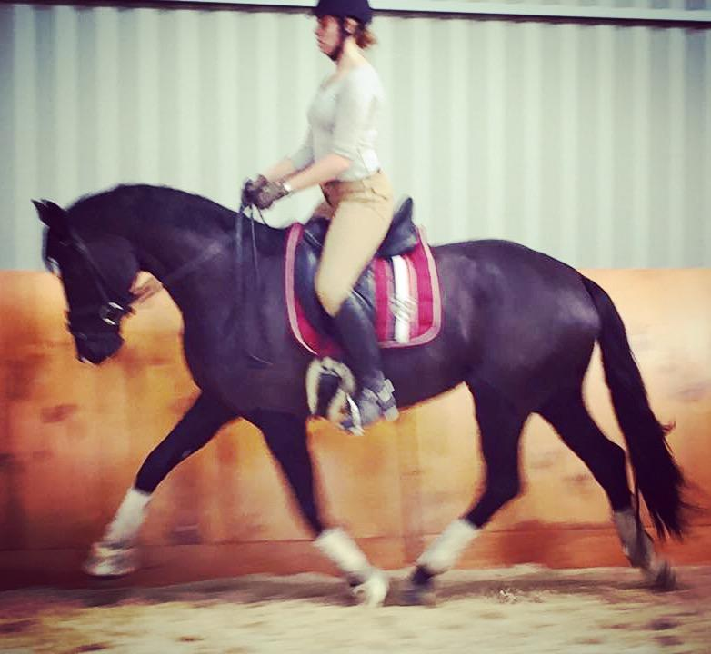 Stunning black mare  with lots of potential