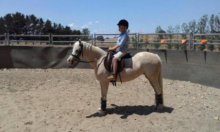 Extremely quiet Welsh B Mare- Kylandee Chablis