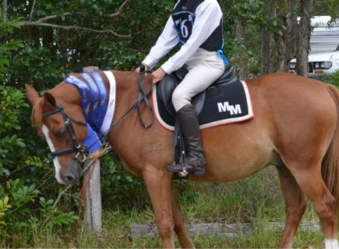 Beaut sporting and show jumping pony