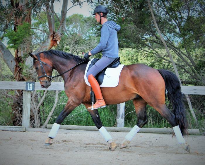 SIR DONERHALL X JAZZ  ET 4 yr old gelding