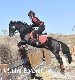Fantastic Performance Pony - Master Teddy Edward