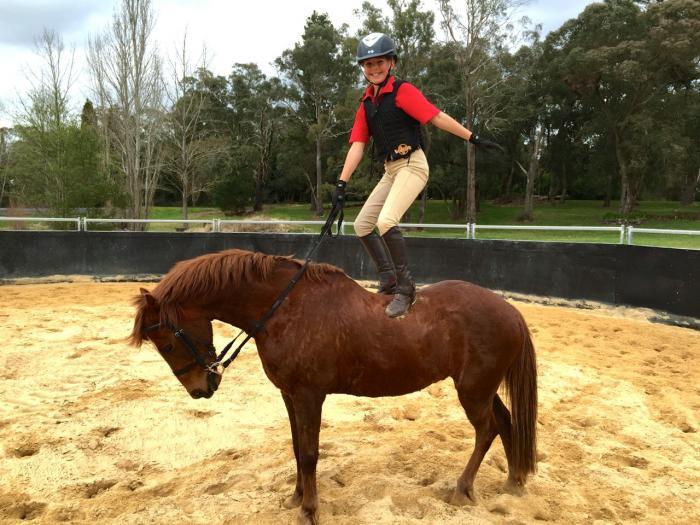 Roy - 13.3hh perfect pony club pony (gelding)