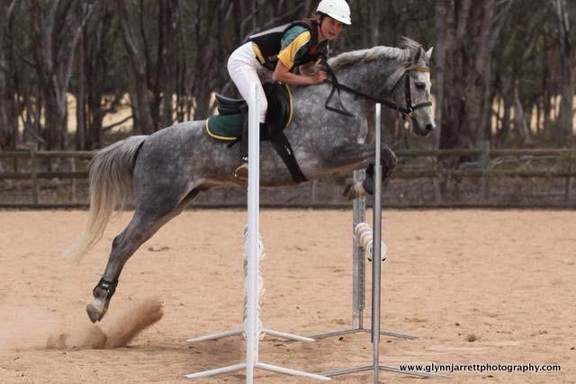competitive Showjumping/allrounder Aussie pony