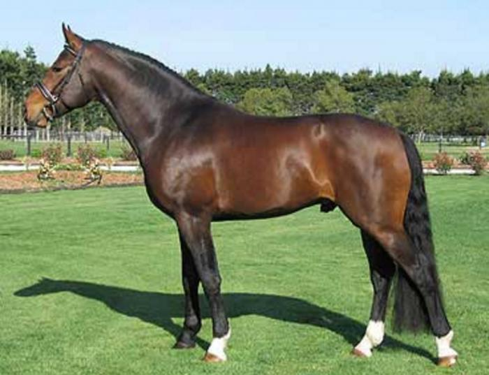 STALLION KINNORDY GYM BELLO - LIFETIME CHANCE!