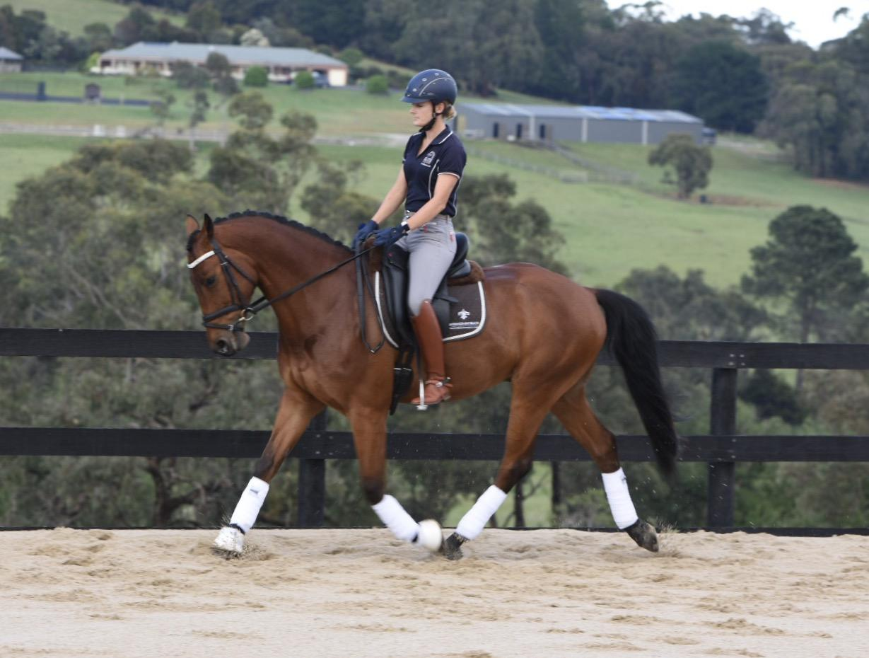 Talented, Fun and Reliable Warmblood