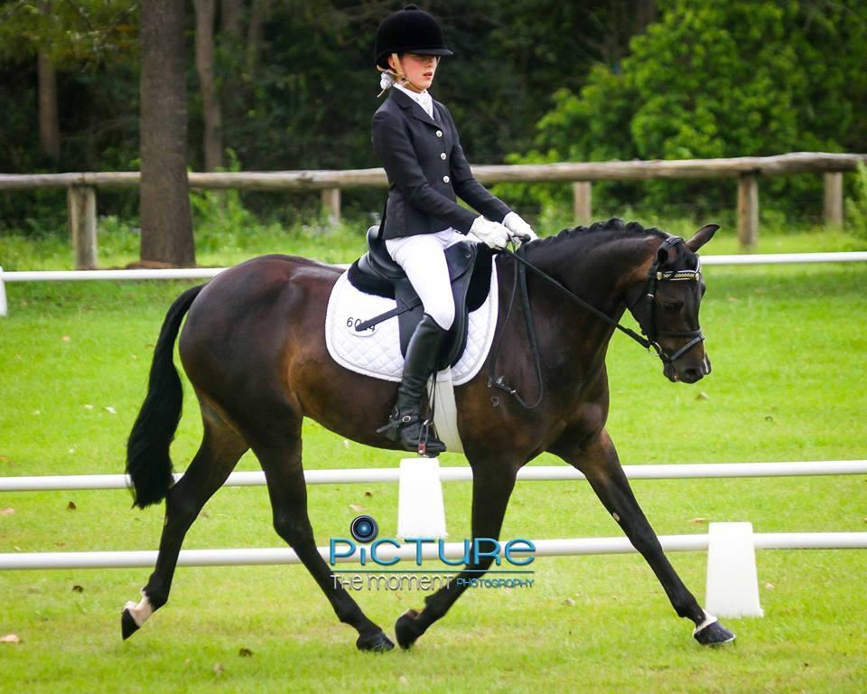 Superb Dressage Pony HUGE PRICE REDUCTION.
