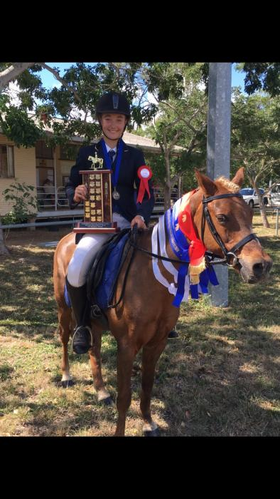 successful dressage / hack pony