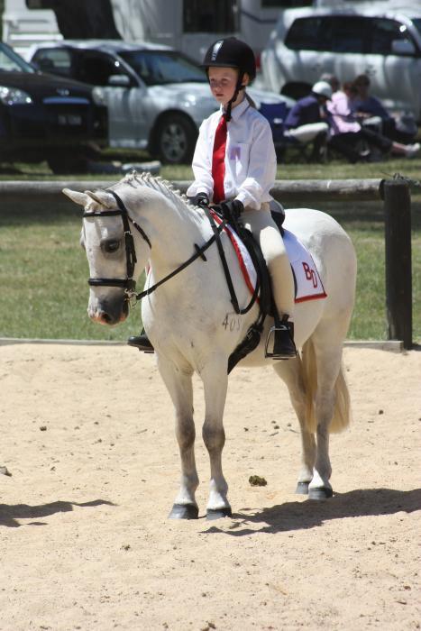 95% bombproof confident beginners pony