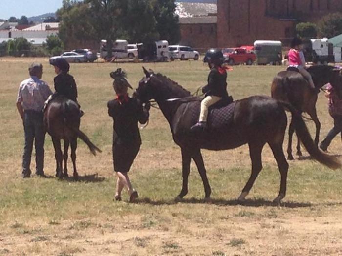 12.3hh Australian Pony-Registered