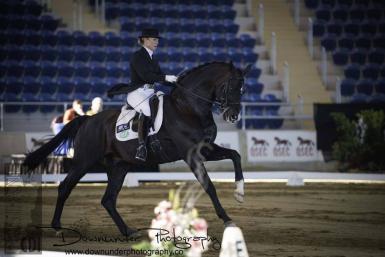 In Foal to: Stedinger