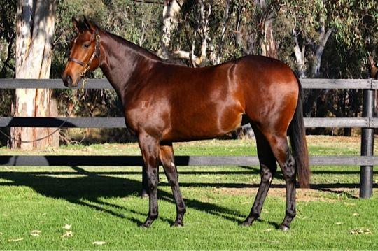 3 YR OLD DOMESDAY FILLY....STUNNING,,,STUNNING....