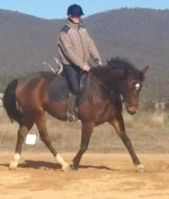 Rising 3 year old WB Mare