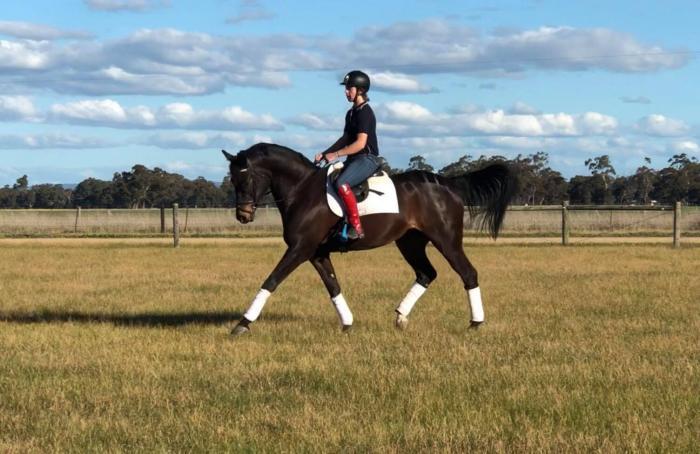 Elegant Performance Horse