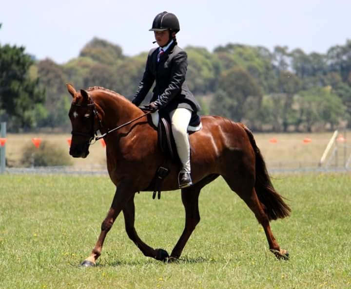 Show or Pony Dressage