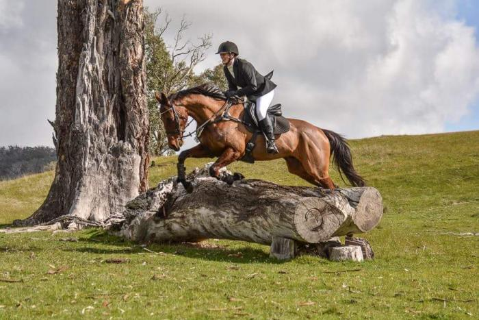 Confident, capable and calm rider for your horse