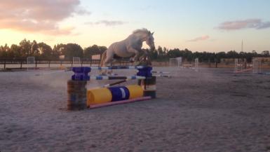 free jumping 1.35m