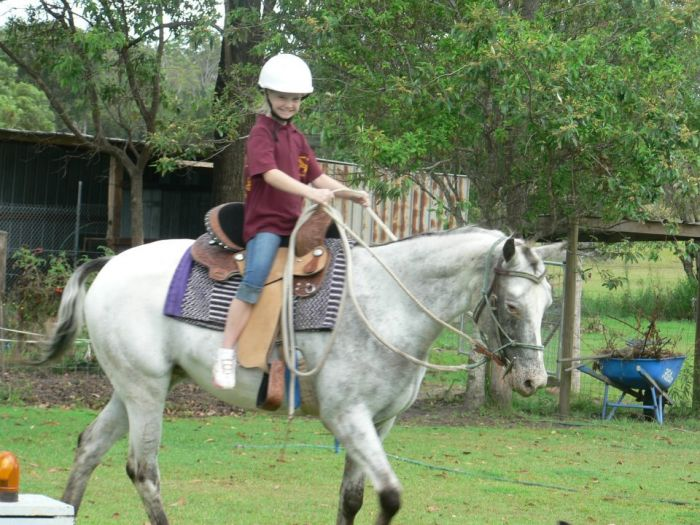 appaloosa mare very quiet
