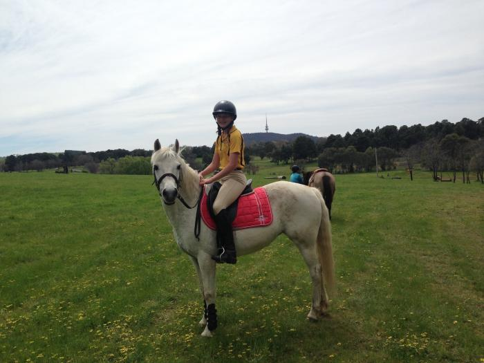 Great small horse for young rider