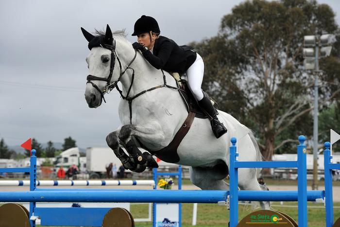 Oaks Sharko - Experienced Showjumper